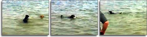 myDogSwimming (20k image)