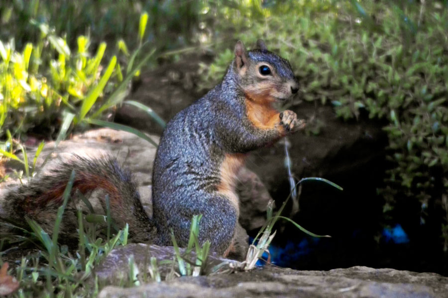 squirrel20080623 (115k image)