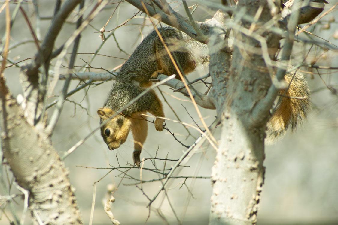 squirrelReaching (161k image)